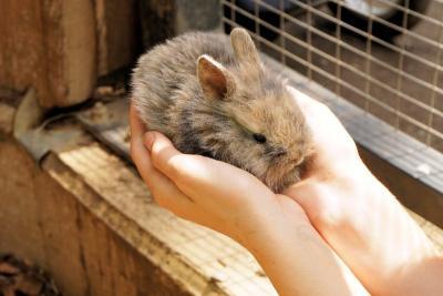 Lutte contre la maltraitance animale une extension des mesures